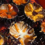 Cool salty orange Heaven - Sea urchins are delicous
