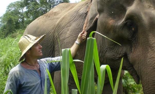 Elephants are beautiful
